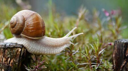 Snail Enjoying Life